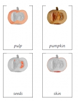 Parts of a pumpkin Montessori cards